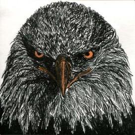 robin ezra-bird